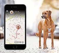GPS-трекер для домашних животных