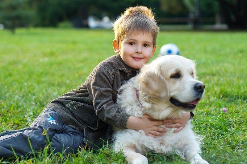 Собака станет лучшим другом малышу