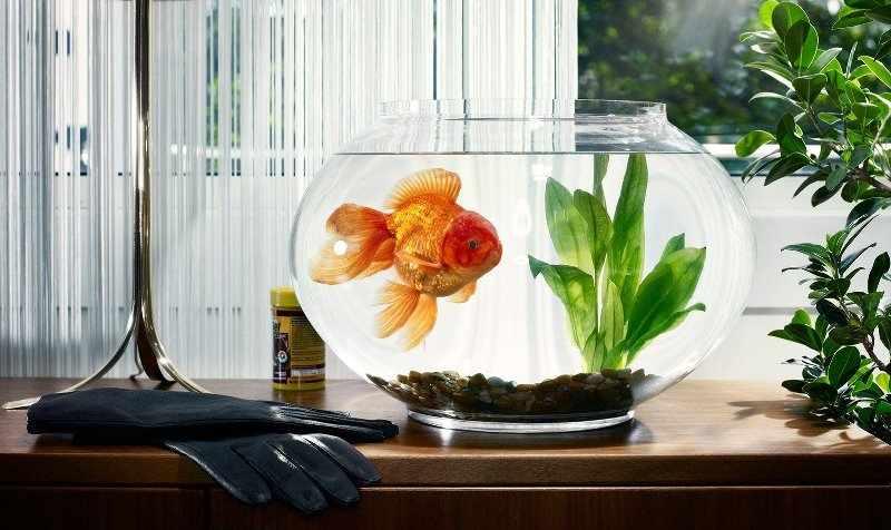 Также аквариум можно дополнить живыми растениями