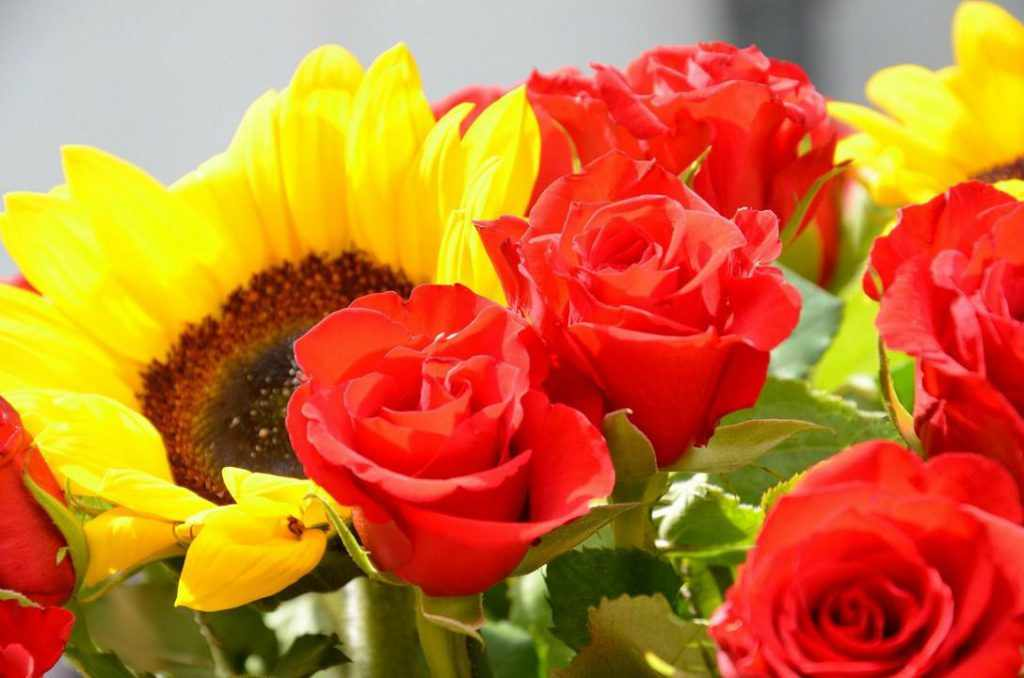 Розы и подсолнухи