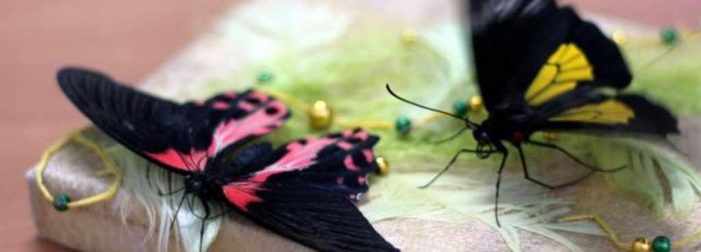 бабочки на открытке