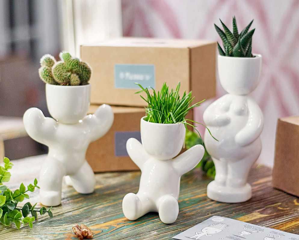 для выращивания растений